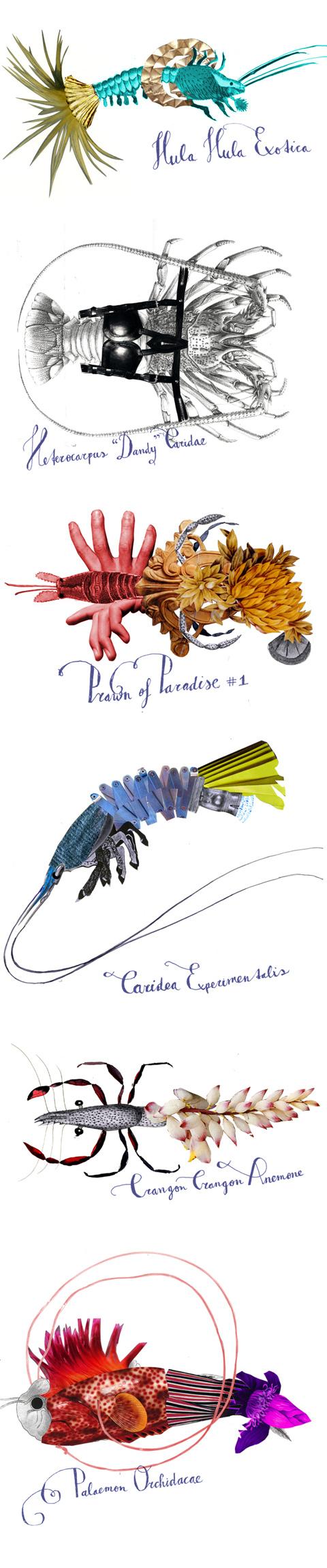 HardHoofd_crustacea-tropicana